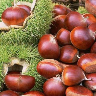 Bí quyết ăn hạt dẻ để khoẻ và da mịn màng 1