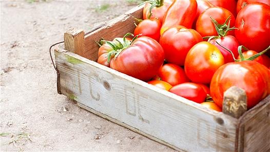 Những thực phẩm không nên ăn trái mùa 2