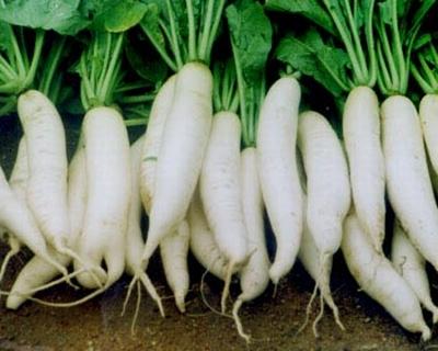Công dụng tuyệt vời của các loại rau cải 4