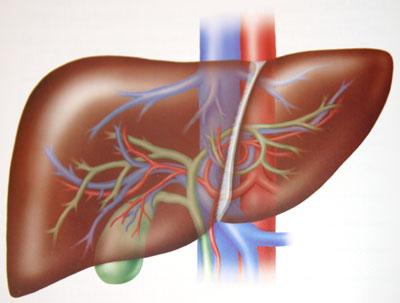 7 dấu hiệu nhận biết gan không khỏe 1
