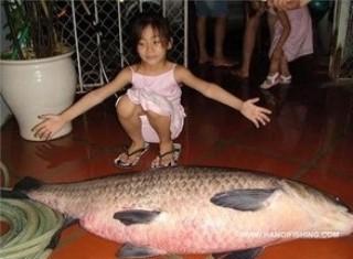 Câu được cá trắm khủng 31 kg tại Hải Dương