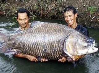 """Kỳ công săn loài cá """"khôn ba năm, dại một giờ"""""""