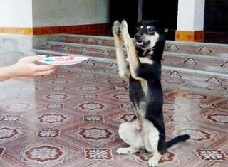 Clip chú chó vái liên tục trước bàn thờ ở xứ Nghệ
