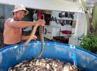 """""""Mốt"""" săn rắn biển làm mồi nhậu: Nguy hiểm mà vẫn ham"""