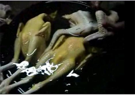 Bộ Y tế dạy dân chọn thực phẩm tránh độc như thế nào? 2