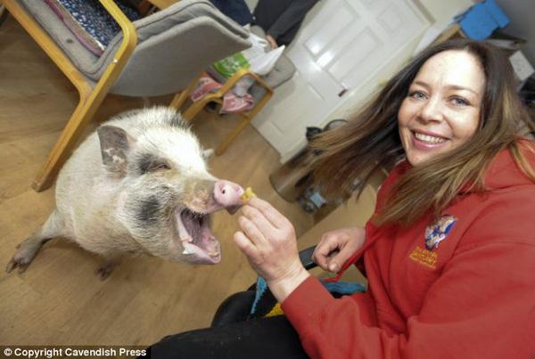 Chú lợn dễ thương luôn nghĩ mình là... chó 2