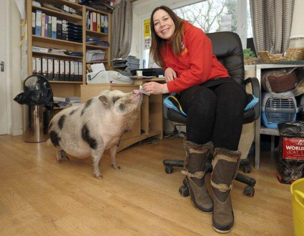 Chú lợn dễ thương luôn nghĩ mình là... chó 1