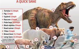 Choáng: Sao Man City chạy nhanh hơn cả khủng long bạo chúa