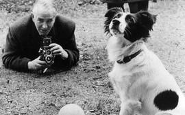 """Pickles - Chú chó anh hùng cứu cả nước Anh khỏi """"thảm họa World Cup"""""""