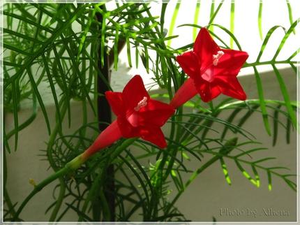 Ngắm những bông hoa tuyệt đẹp có công dụng trị bệnh không ngờ 9