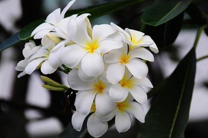 Ngắm những bông hoa tuyệt đẹp có công dụng trị bệnh không ngờ 15