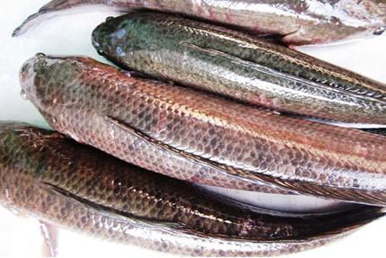 Ngày vía thần Tài, cá lóc nướng đắt gấp đôi 5