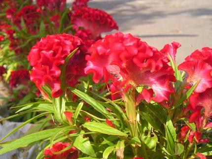 Ngắm những bông hoa tuyệt đẹp có công dụng trị bệnh không ngờ 4