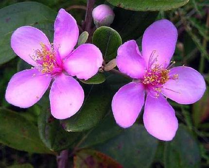 Ngắm những bông hoa tuyệt đẹp có công dụng trị bệnh không ngờ 6