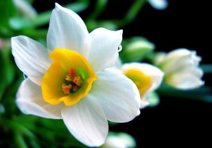 Ngắm những bông hoa tuyệt đẹp có công dụng trị bệnh không ngờ 8