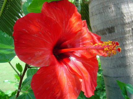 Ngắm những bông hoa tuyệt đẹp có công dụng trị bệnh không ngờ 1