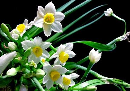 Ngắm những bông hoa tuyệt đẹp có công dụng trị bệnh không ngờ 7