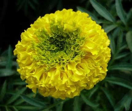 Ngắm những bông hoa tuyệt đẹp có công dụng trị bệnh không ngờ 12