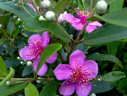 Ngắm những bông hoa tuyệt đẹp có công dụng trị bệnh không ngờ 5