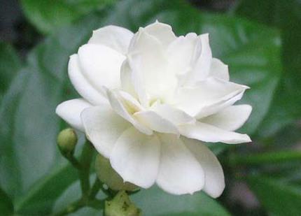 Ngắm những bông hoa tuyệt đẹp có công dụng trị bệnh không ngờ 2