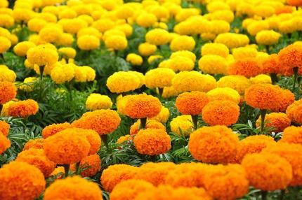 Ngắm những bông hoa tuyệt đẹp có công dụng trị bệnh không ngờ 11