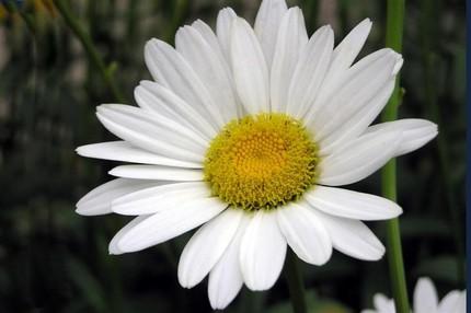 Ngắm những bông hoa tuyệt đẹp có công dụng trị bệnh không ngờ 10